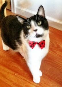 Cat Bow Tie - Etsy