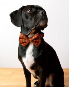 Dog Bow Tie Handmade - Etsy